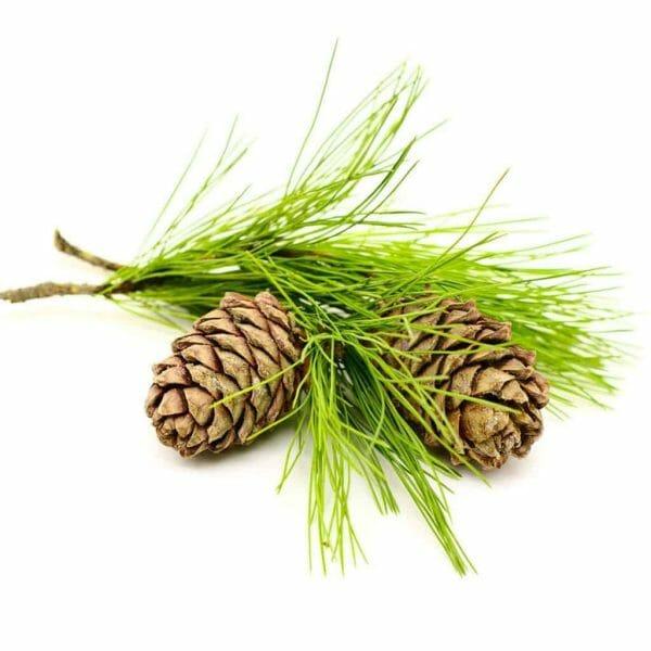 Cedar Wood Hydrosol