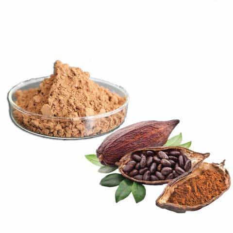 Cocoa Seed Extract Powder 20%