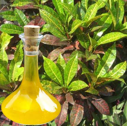 Croton Essential Oil