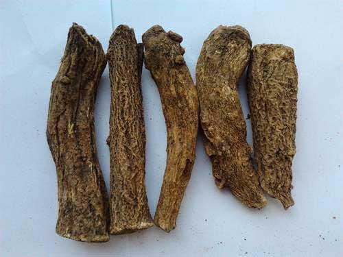 Costus Root Essential Oil