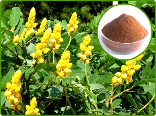 Cassia Angustifolia Extract(Senna Extract)